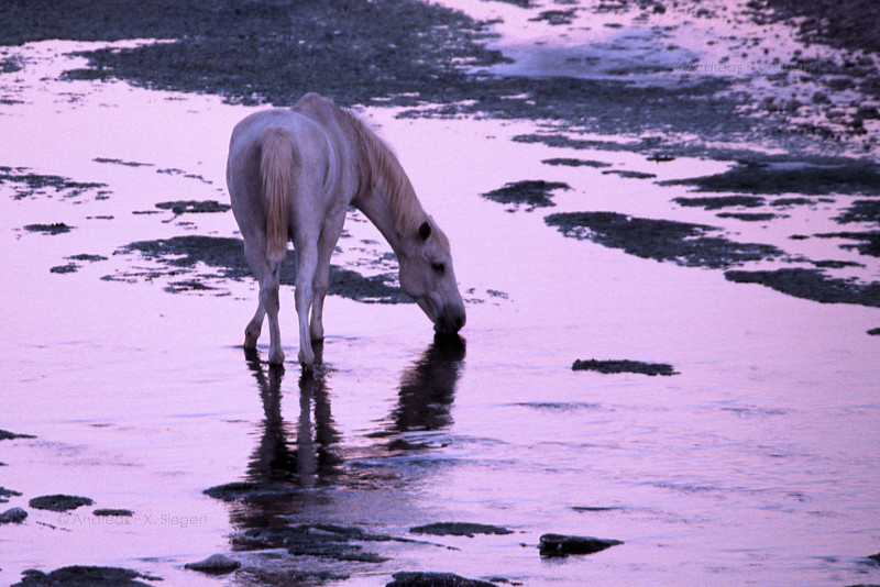 A horse at dusk - Düsternbrok game farm