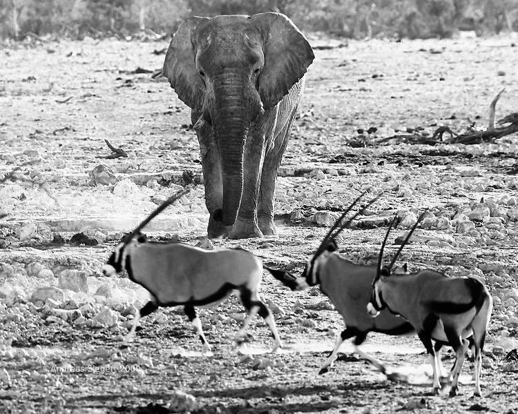 Elephant and Oryx<br /> Etosha, July 2000