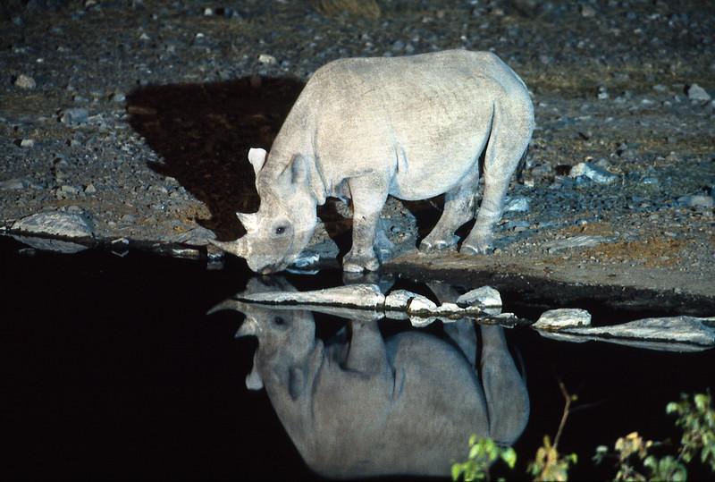 Rhino at waterhole in the night<br /> Etosha, July 2000