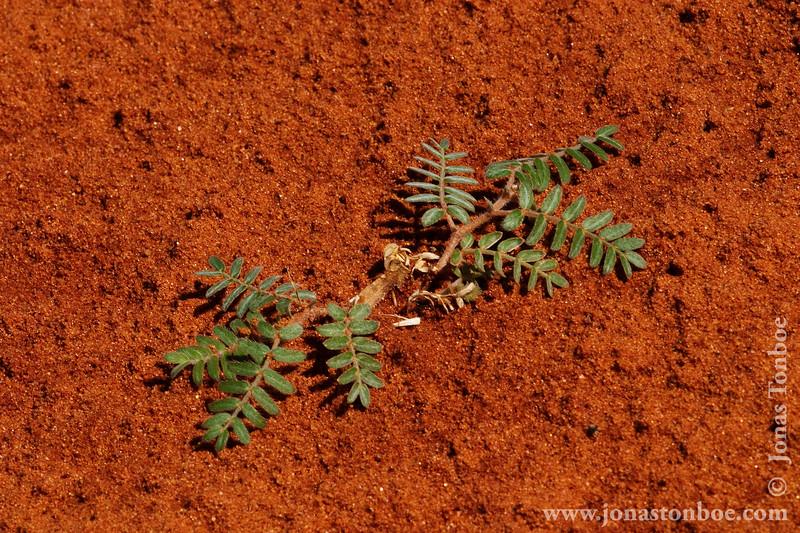 Desert Sand and Vegetation