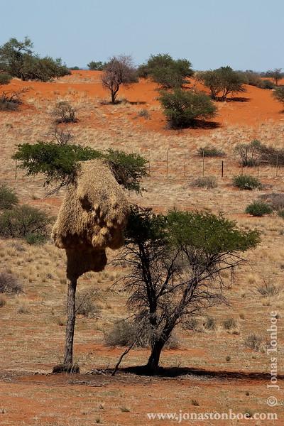 Desert Landscape and Weaver Birds Nest