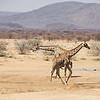 Trading Places, Erindi Private Game Reserve, Khomas Region
