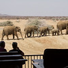 Watching the Herd Approach the Watering Hole, Erindi Old Traders' Lodge, Khomas Region