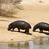 After Their Dunk in the Watering Hole, Erindi Private Game Reserve, Khomas Region