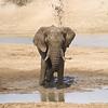 Making a Splash, Erindi Private Game Reserve, Khomas Region
