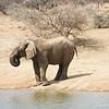 Toe-testing, Erindi Private Game Reserve, Khomas Region