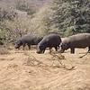 Lots of Bulk to Feed,  Erindi Private Game Reserve, Khomas Region