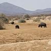 Hippo, Erindi Private Game Reserve, Khomas Region