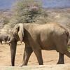 Massive Leader of the Pack, Erindi Private Game Reserve, Khomas Region