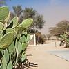 Sand Storm Passing Through Solitaire, Namib Desert