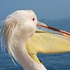 Pelican Up Close, Walvis Bay,  Swakopmund