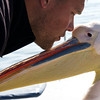 Trust Between Species, Walvis Bay, Swakopmund
