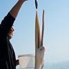Fish for the Pelican, Walvis Bay, Swakopmund