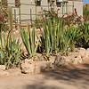 Solitaire, Namib Desert