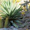 Succulents, Solitaire, Namib Desert