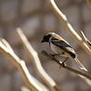 A Little Birdie, Solitaire, Namib Desert