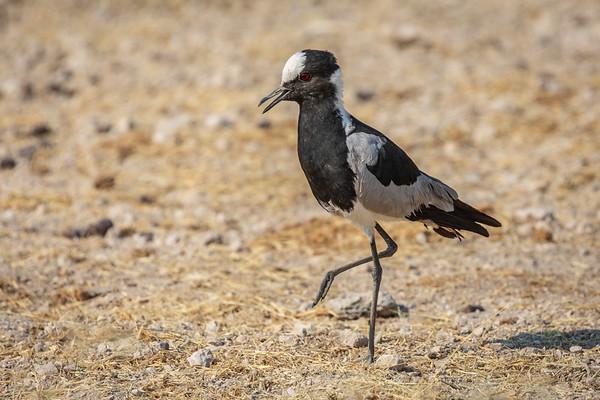 Namibia 2018