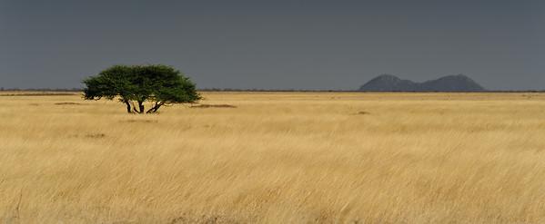 Landscape at Etosha-Halali