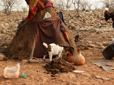 A Himba dwelling and goat.