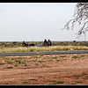 We stopped for lunch, when these locals with their donkey cart were passing by.  It was starting to rain and the man approached us.  We offered him food and water, but he declined saying he only needed plastic bag to protect their phones in the rain.  North of Mariental in the Hardap Region of Namibia,  Africa. <br><br> Photographed March 2014 - © 2014 Lesley Bray Photography - All Rights Reserved.