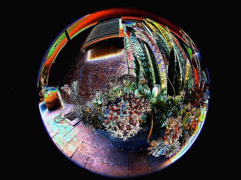 succulents-solarized 2 750