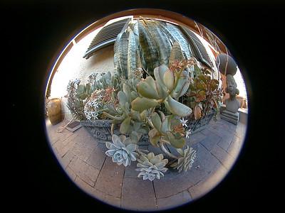 succulents-villa-verdi 2 749