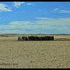 Desert living at Homeb