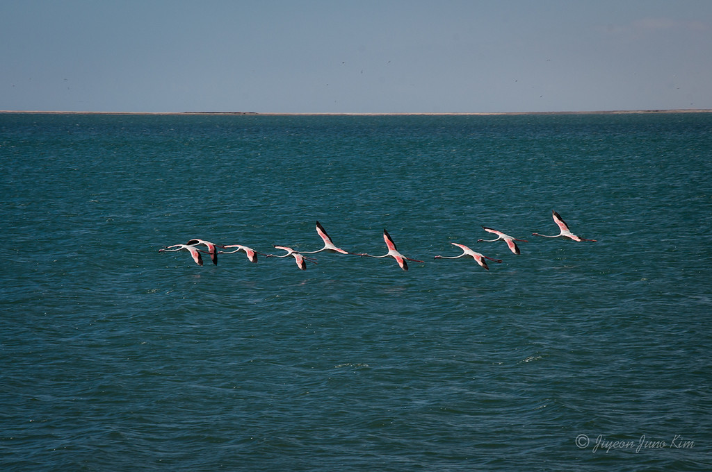 Flamingoes on the Sandwich Harbour