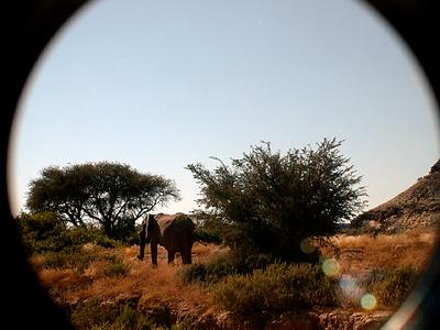 elephant 1 672