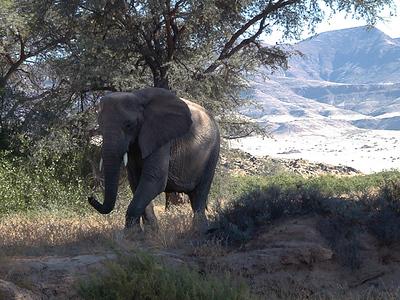 elephant 1 663