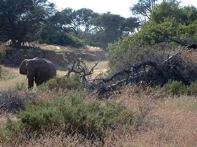 elephant 1 674