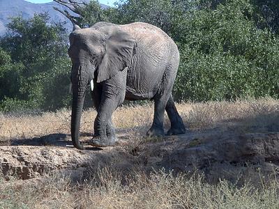 elephant 1 664