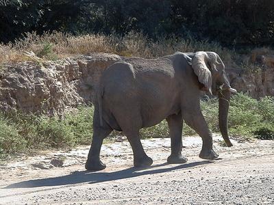 elephant 1 665