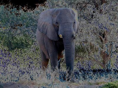 elephant-comin-atcha 1 658