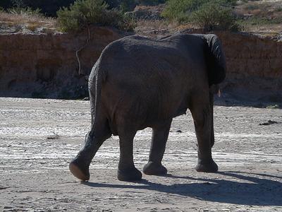 elephant 1 667