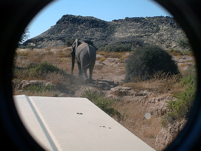elephant 1 671