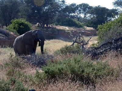 Safari Adventure #8A / Spirit Of The Namib