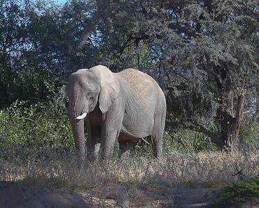 elephant 1 657