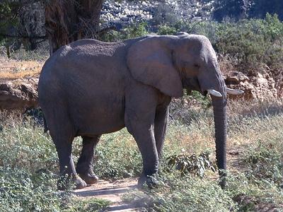 elephant 1 662