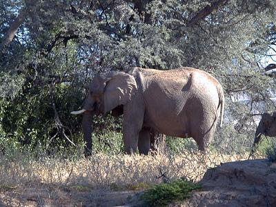 elephants 1 651