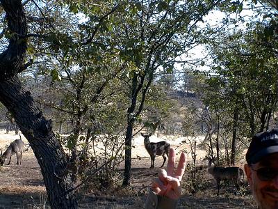 joel-antelopes 1 061