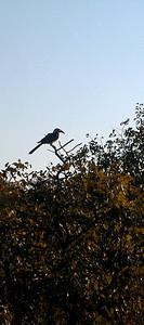 hornbill 1 072