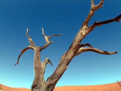 acacia-deadvlei 2 174