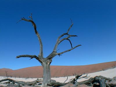 acacia-deadvlei 2 191