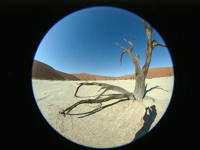acacia-deadvlei 2 176