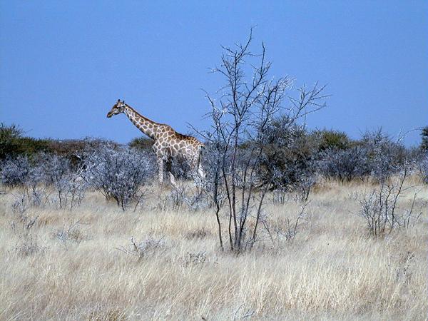 Safari Adventures #2 / Spirit Of The Namib