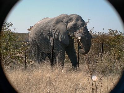 elephant-etosha 1 196