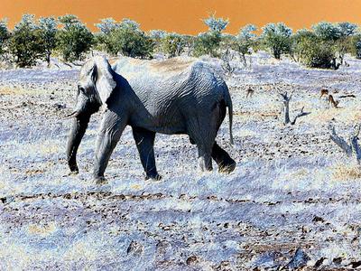 elephant-etosha 1 208