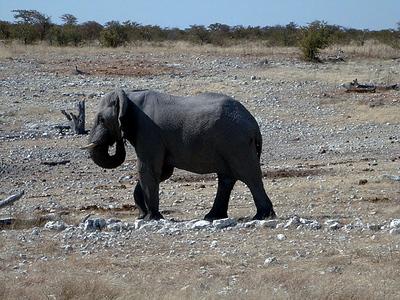 elephant-etosha 1 209
