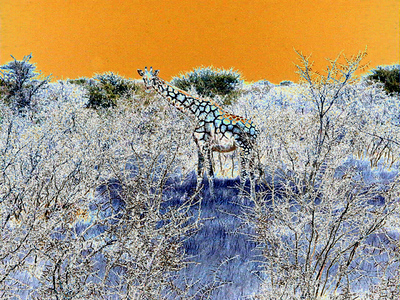 solarized-giraffe 1 243